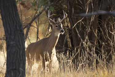 Emergency Order Issued After 6 Breeding Facilities Test Positive for 'zombie Deer' Disease