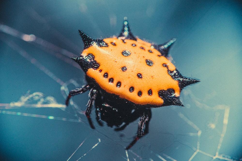 orange and black ladybug on spider web in close up photography during daytime