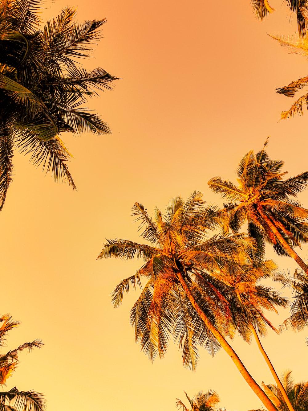 green palm tree under orange sky