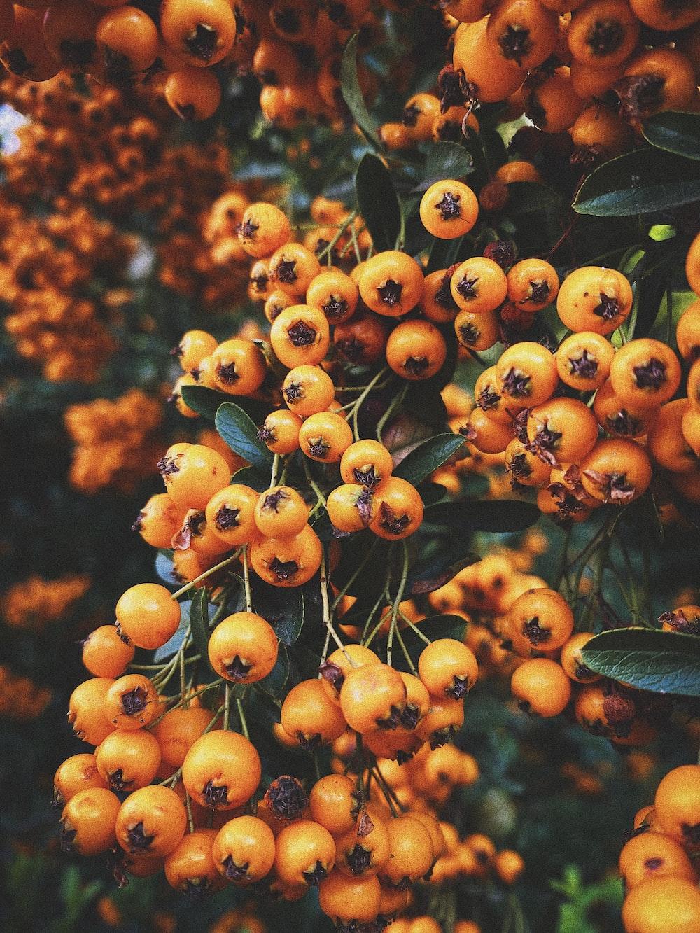 orange fruit in tilt shift lens