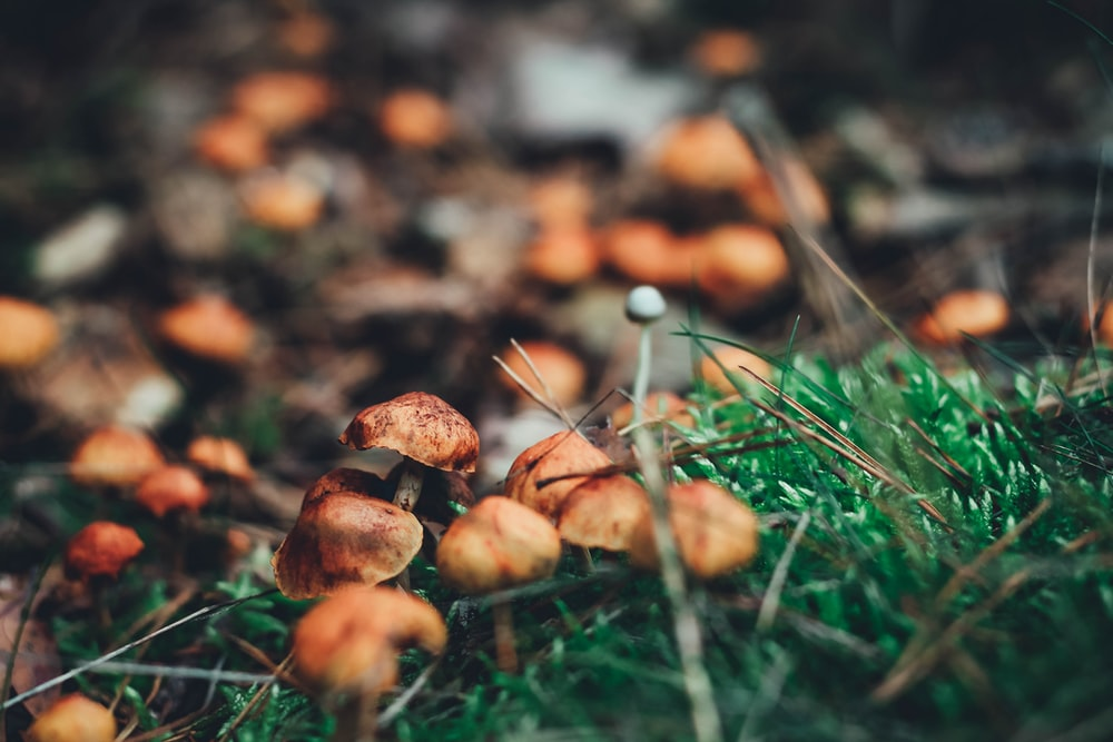 brown mushrooms on green grass during daytime