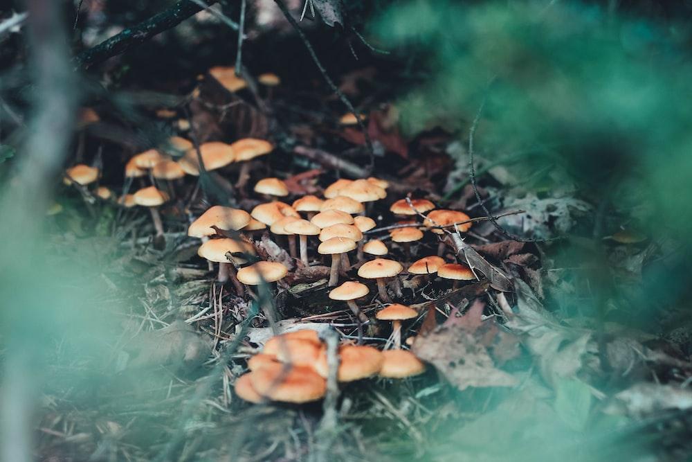 brown mushrooms on green grass