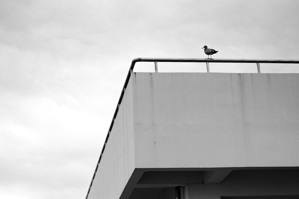 grayscale photo of a bird on a building