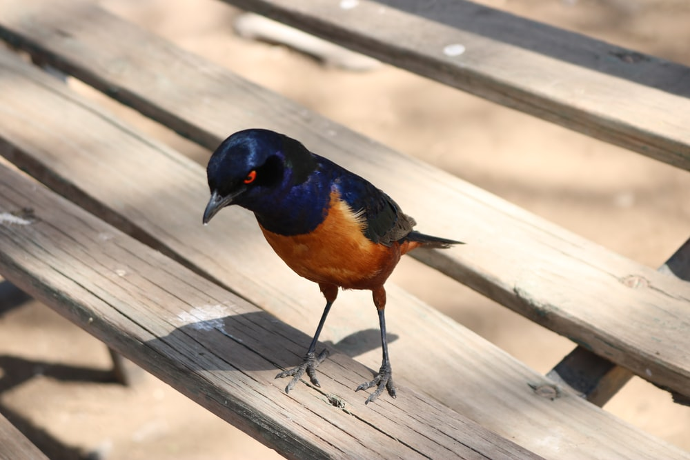 black and brown bird on wooden surface