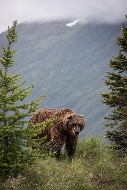 brown bear on green tree during daytime