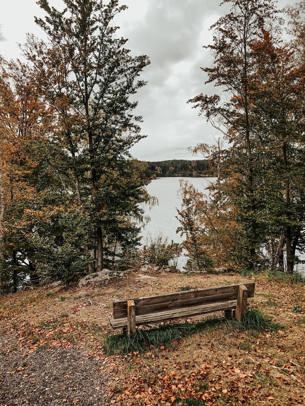 brown wooden bench near lake during daytime