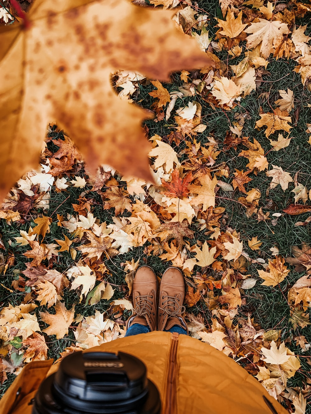 person in brown pants standing on dried leaves