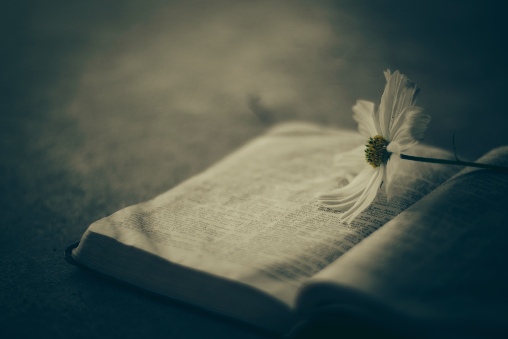 white flower on white book page