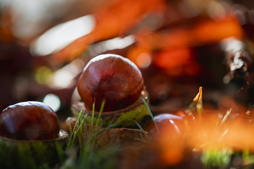 brown and green round fruit on green grass