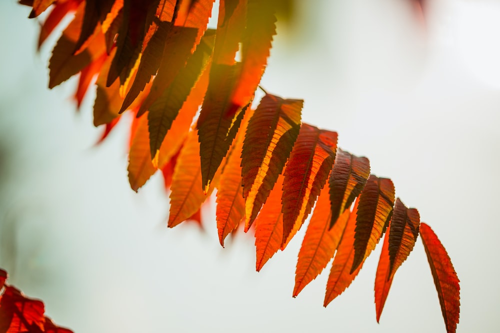 brown leaves on white table