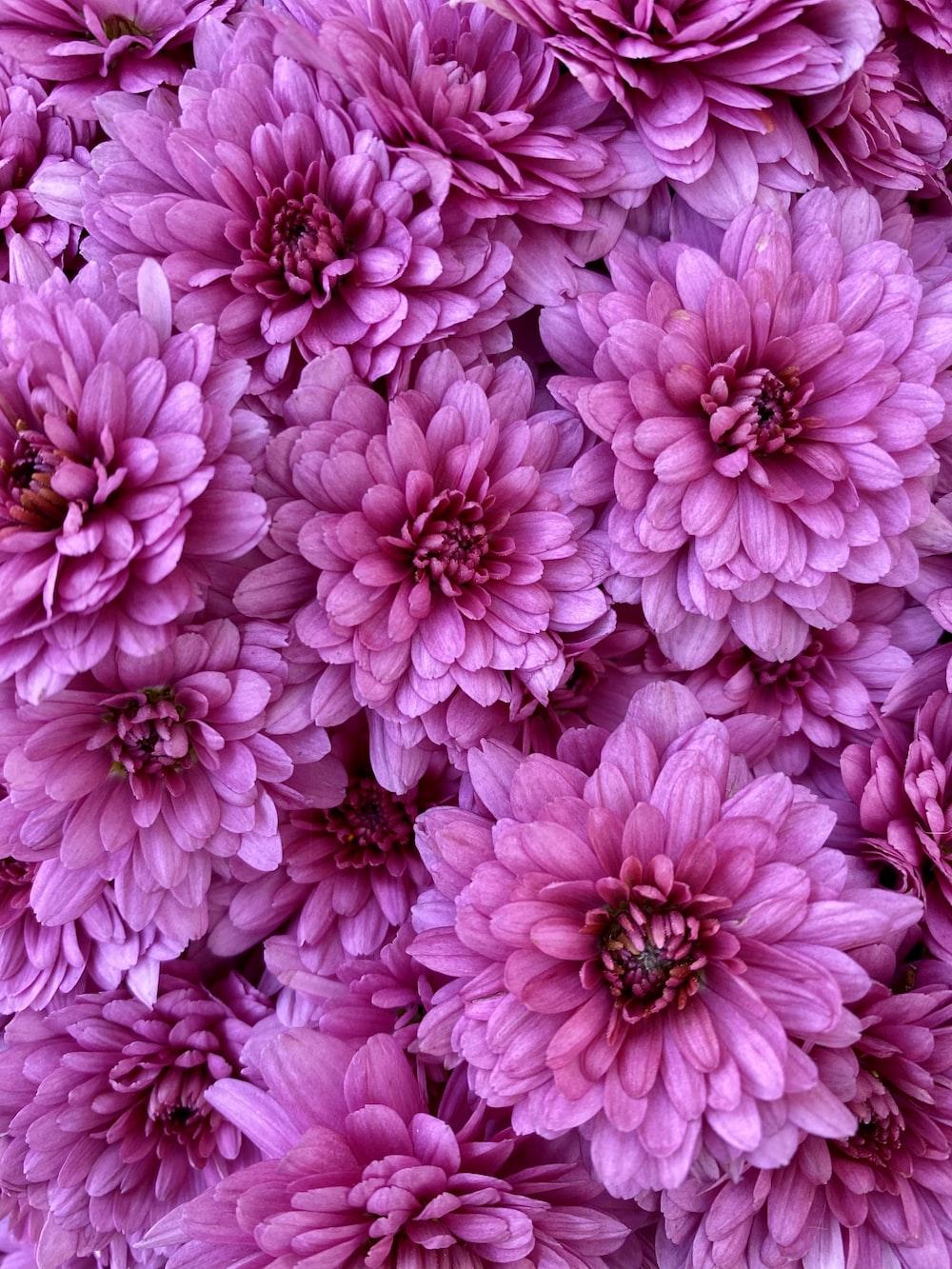 pink flowers in macro lens