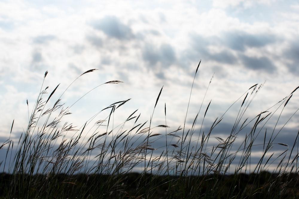 green grass under white clouds during daytime