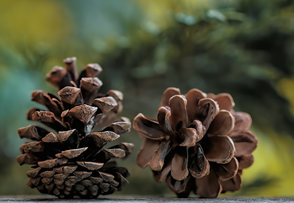 brown pine cone in close up photography