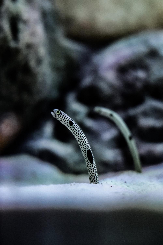 black and white snake on black rock