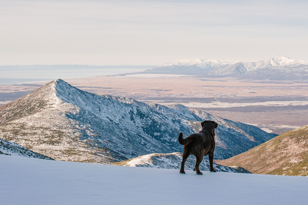 black labrador retriever on snow covered ground during daytime