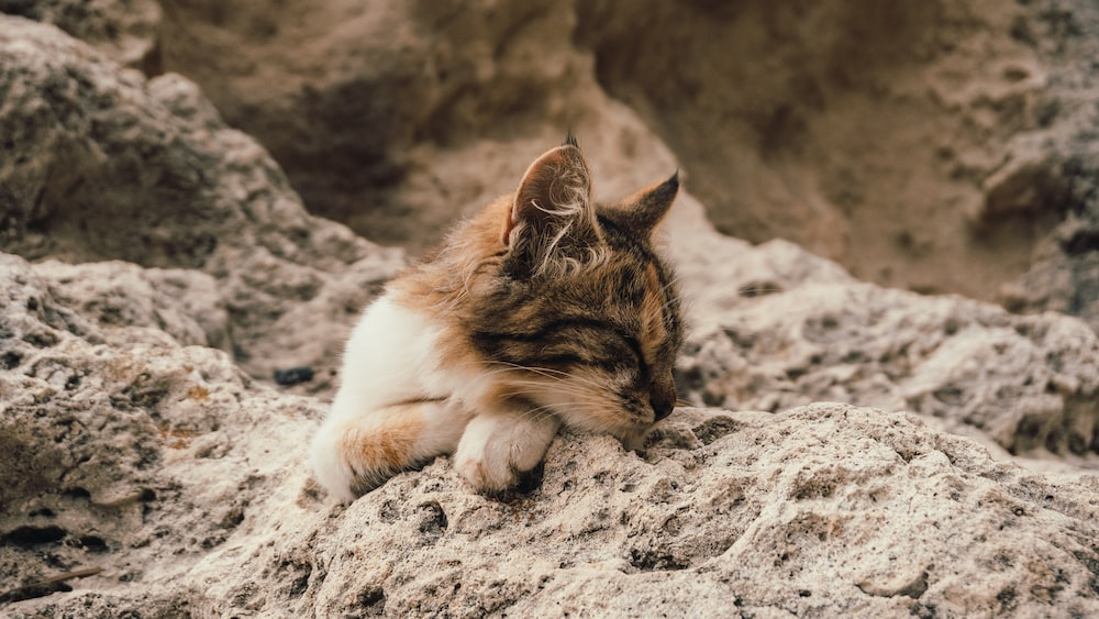 white and brown cat lying on gray sand