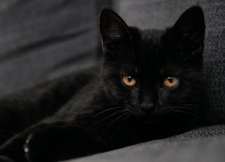 black cat lying on gray textile
