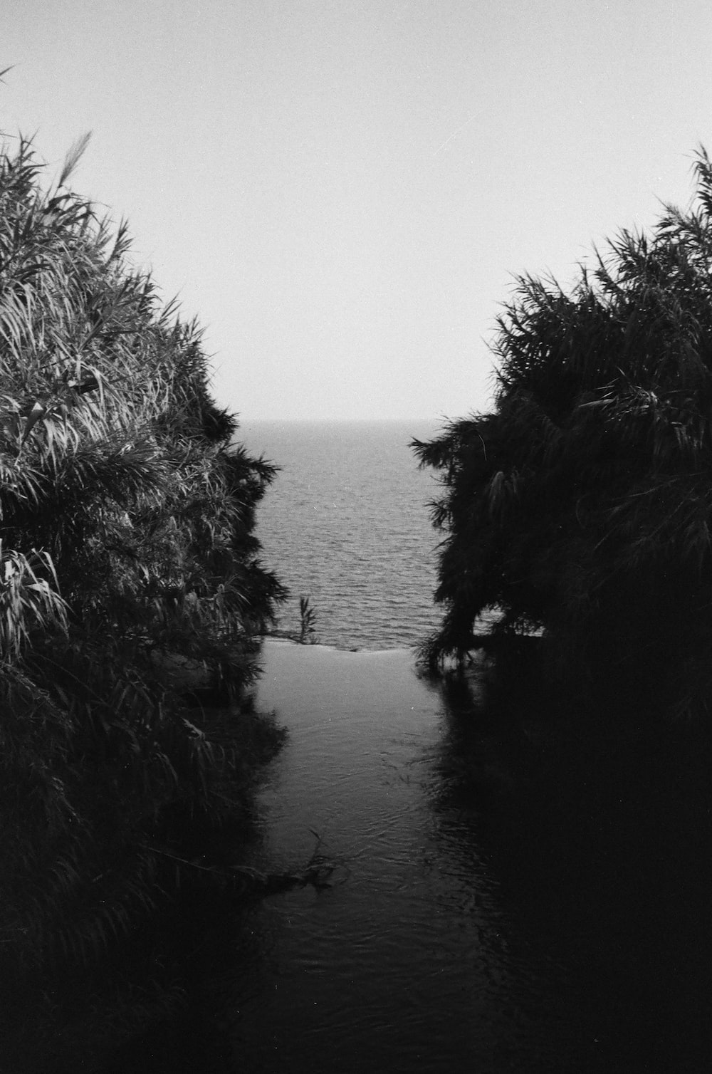 grayscale photo of body of water between trees