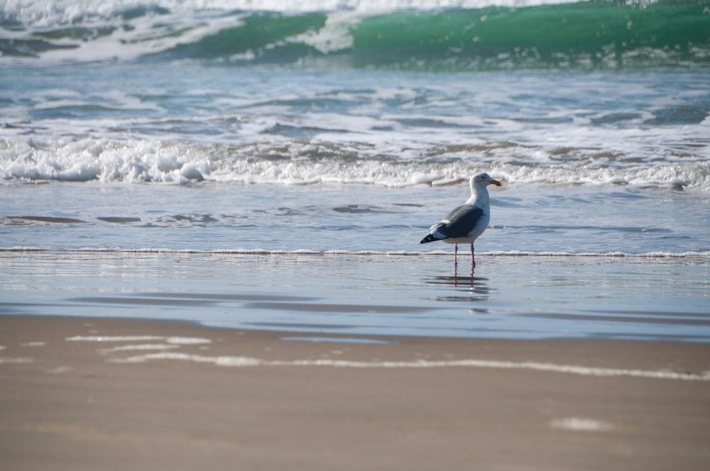 white and black bird on seashore during daytime