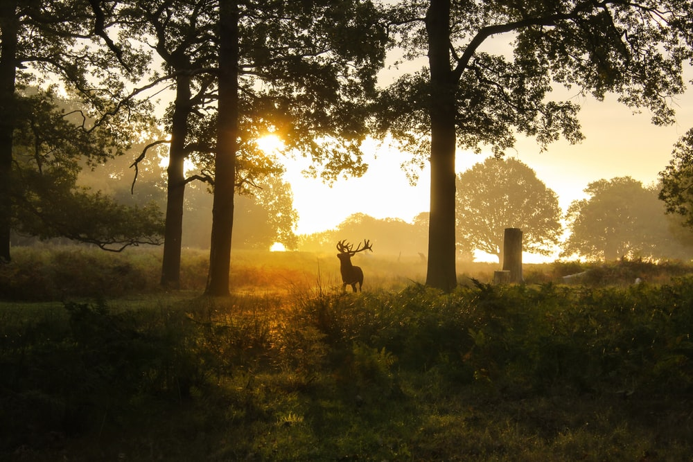 silhouette of deer on green grass field during sunset