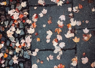 white and brown leaves on gray concrete pavement
