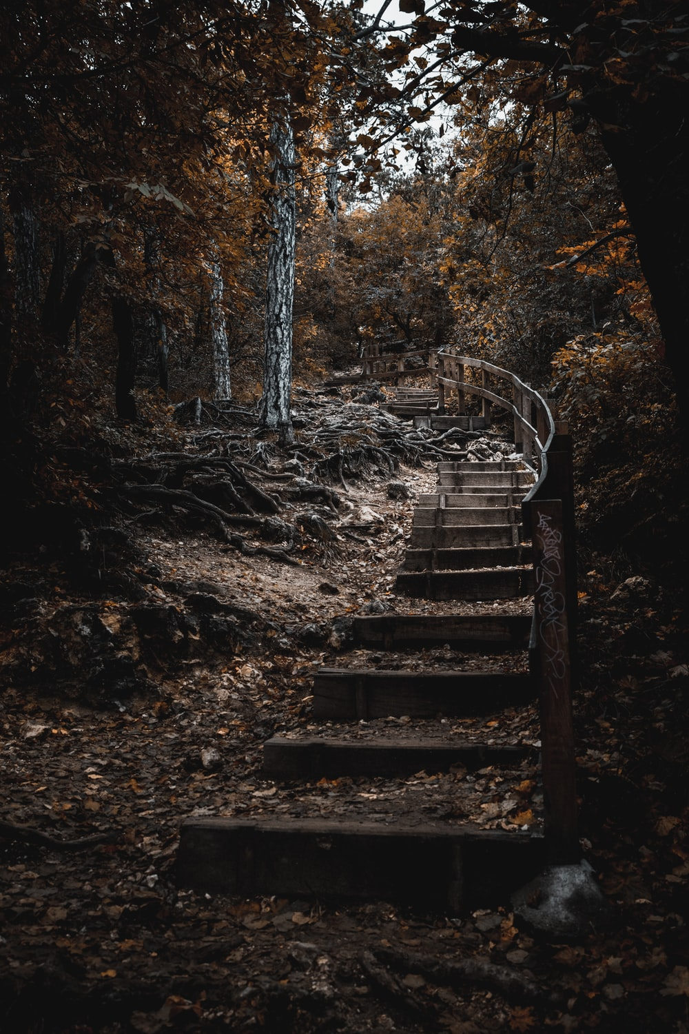 Brown Wooden Staircase In The Woods Photo Free Ground Image On Unsplash