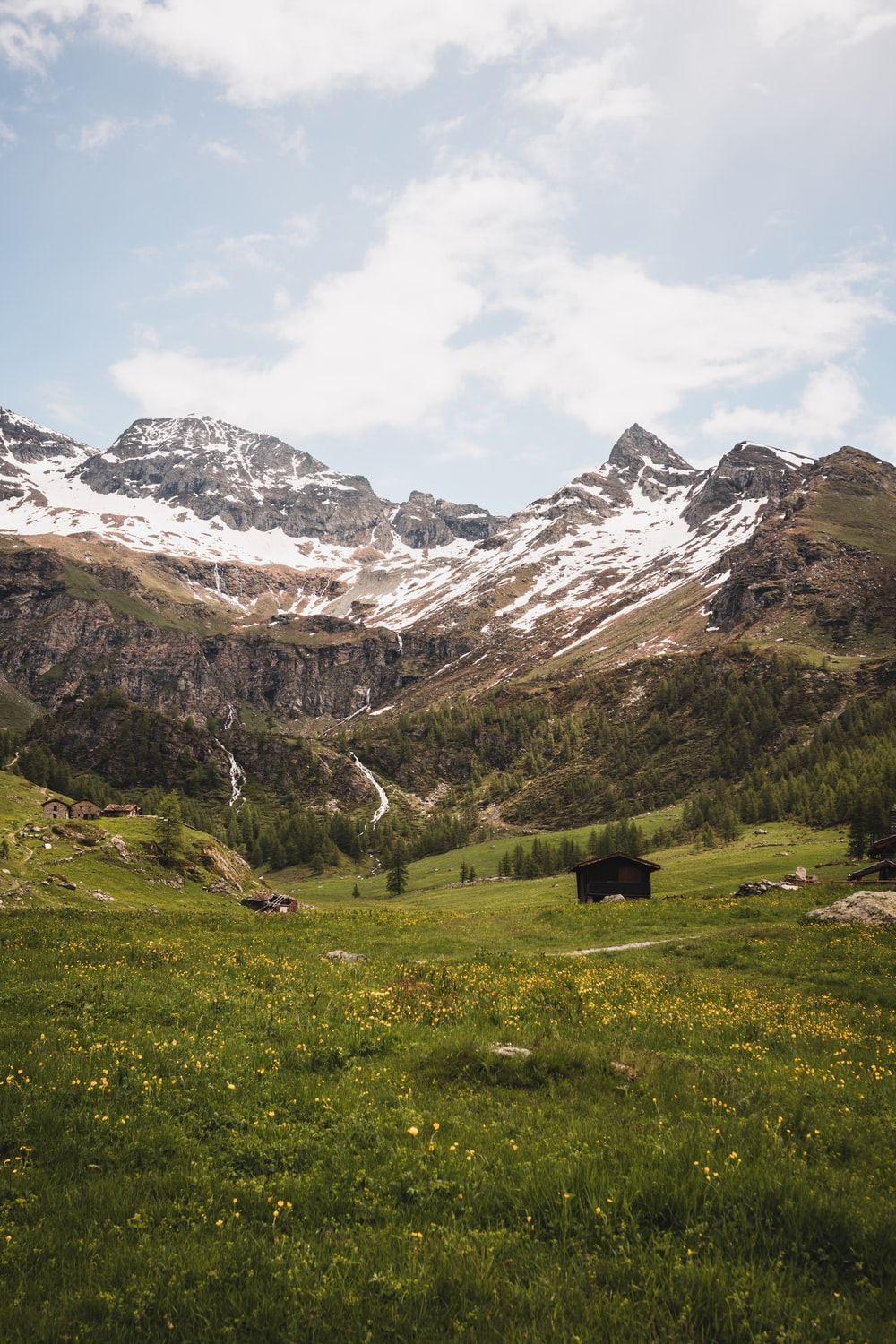 black cow on green grass field near snow covered mountain during daytime