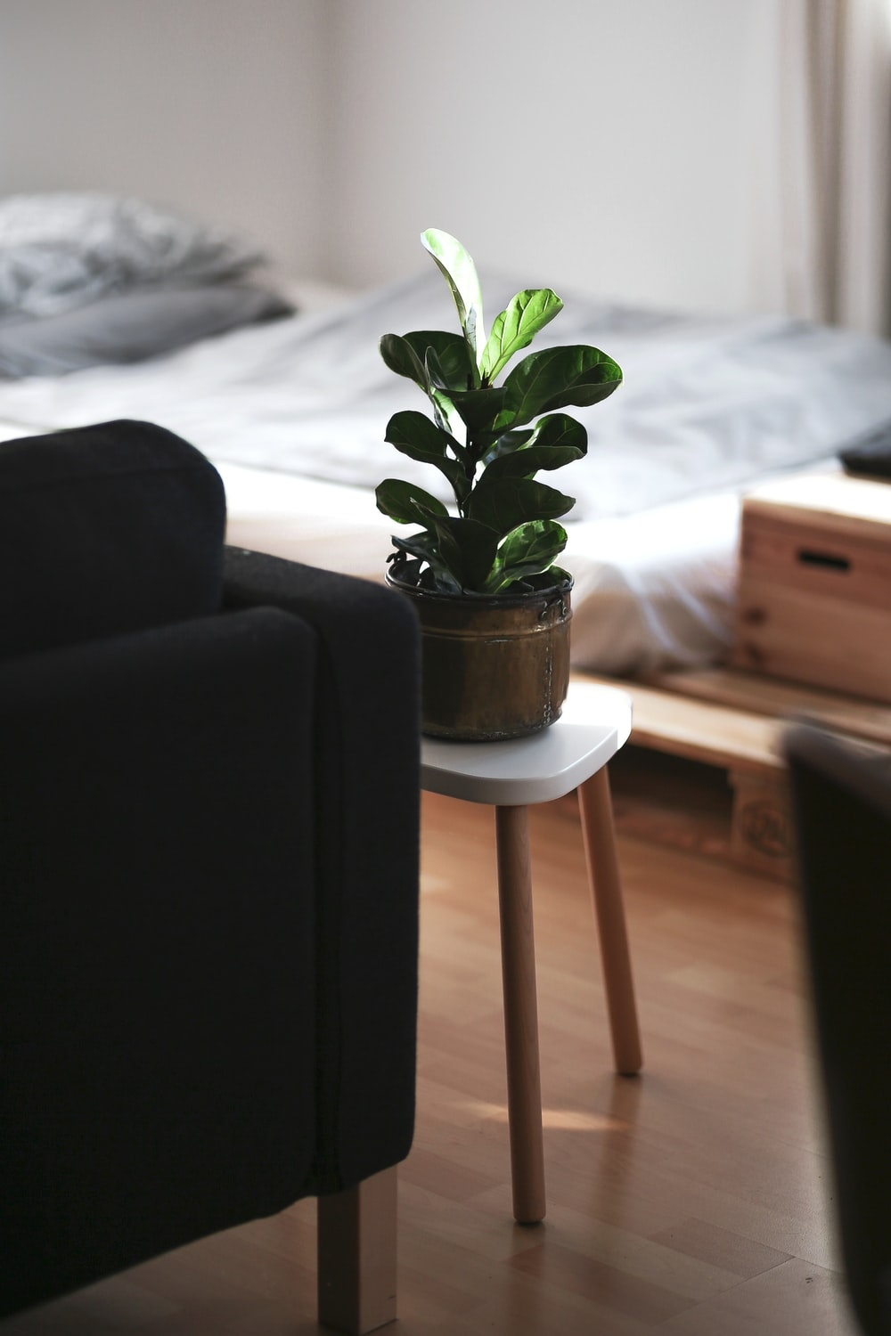 green plant on white pot on brown wooden table