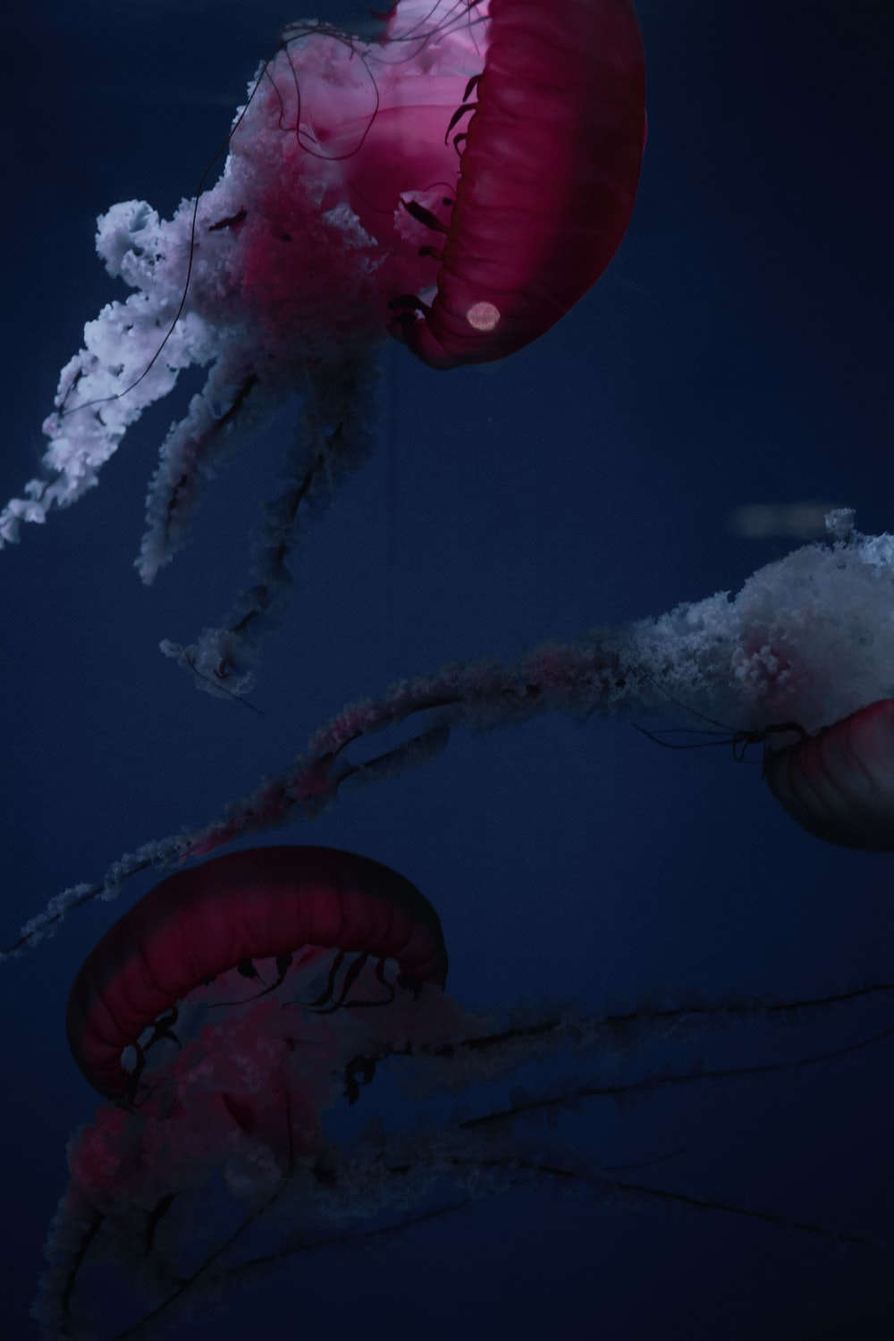 red and white jellyfish under water