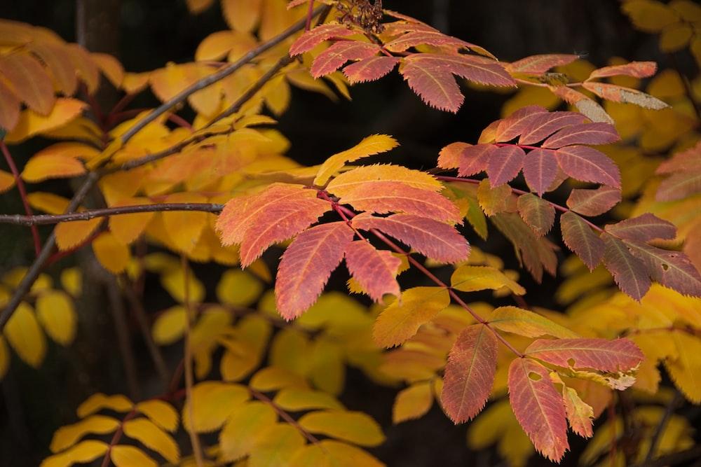green and brown leaves in tilt shift lens