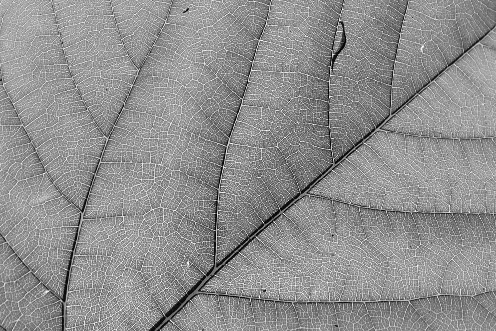 grayscale photo of leaf with water droplets