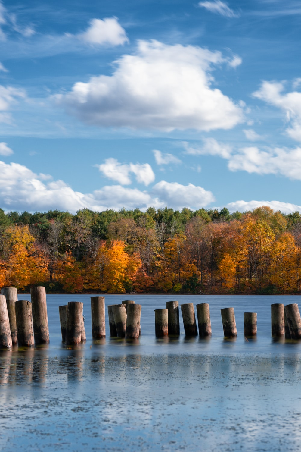 brown wooden posts on body of water near green and yellow trees under blue and white