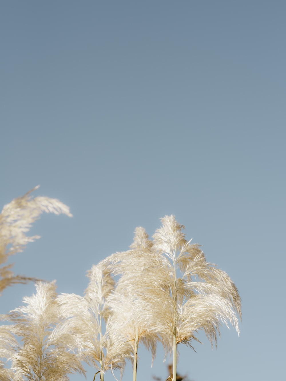 white and brown plant under blue sky during daytime