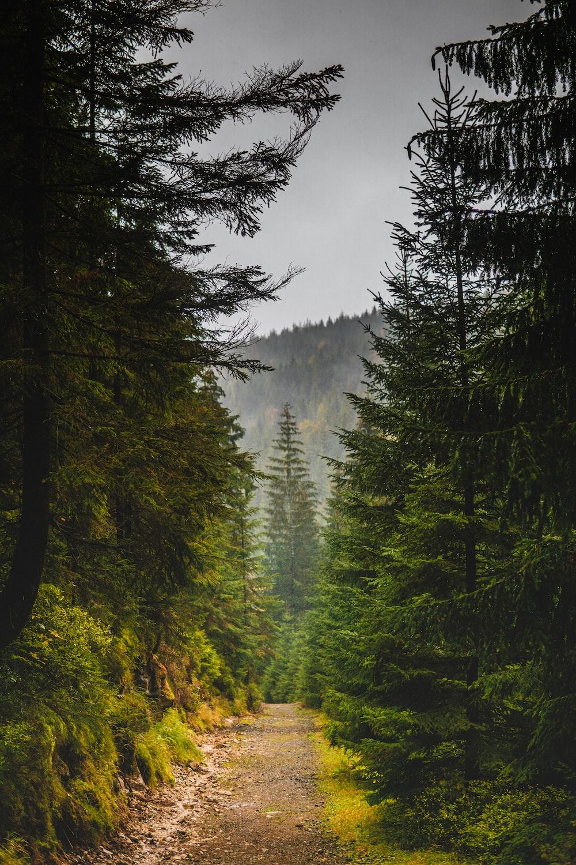 green trees under gray sky