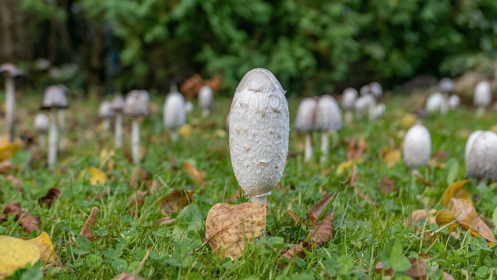 white mushroom on green grass during daytime