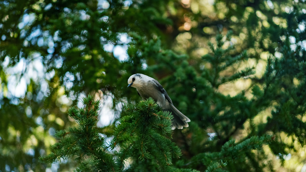 white and blue bird perched on tree branch during daytime