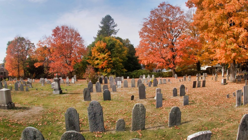 cemetery with trees under blue sky during daytime