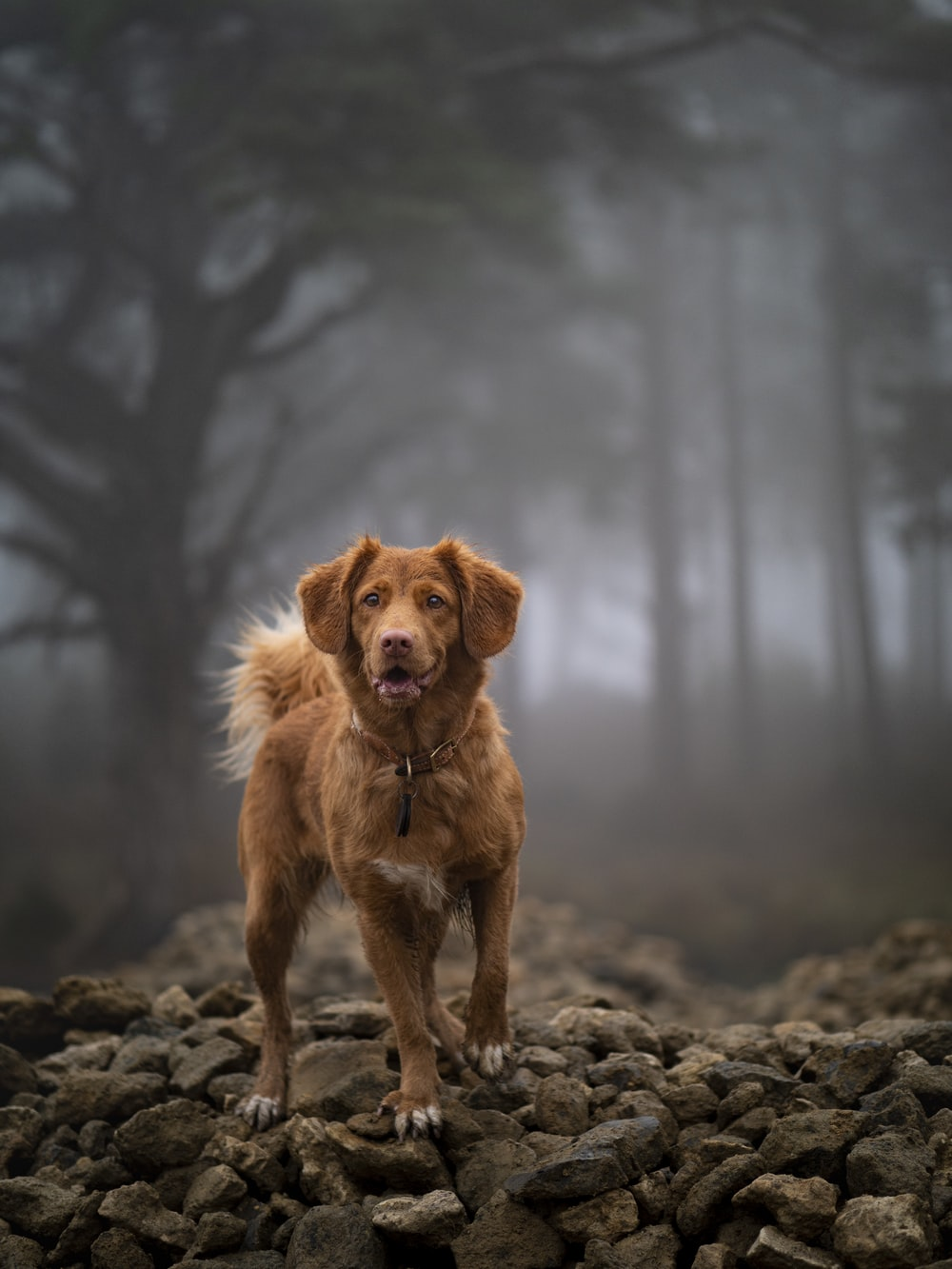 brown long coated dog on gray rock during daytime
