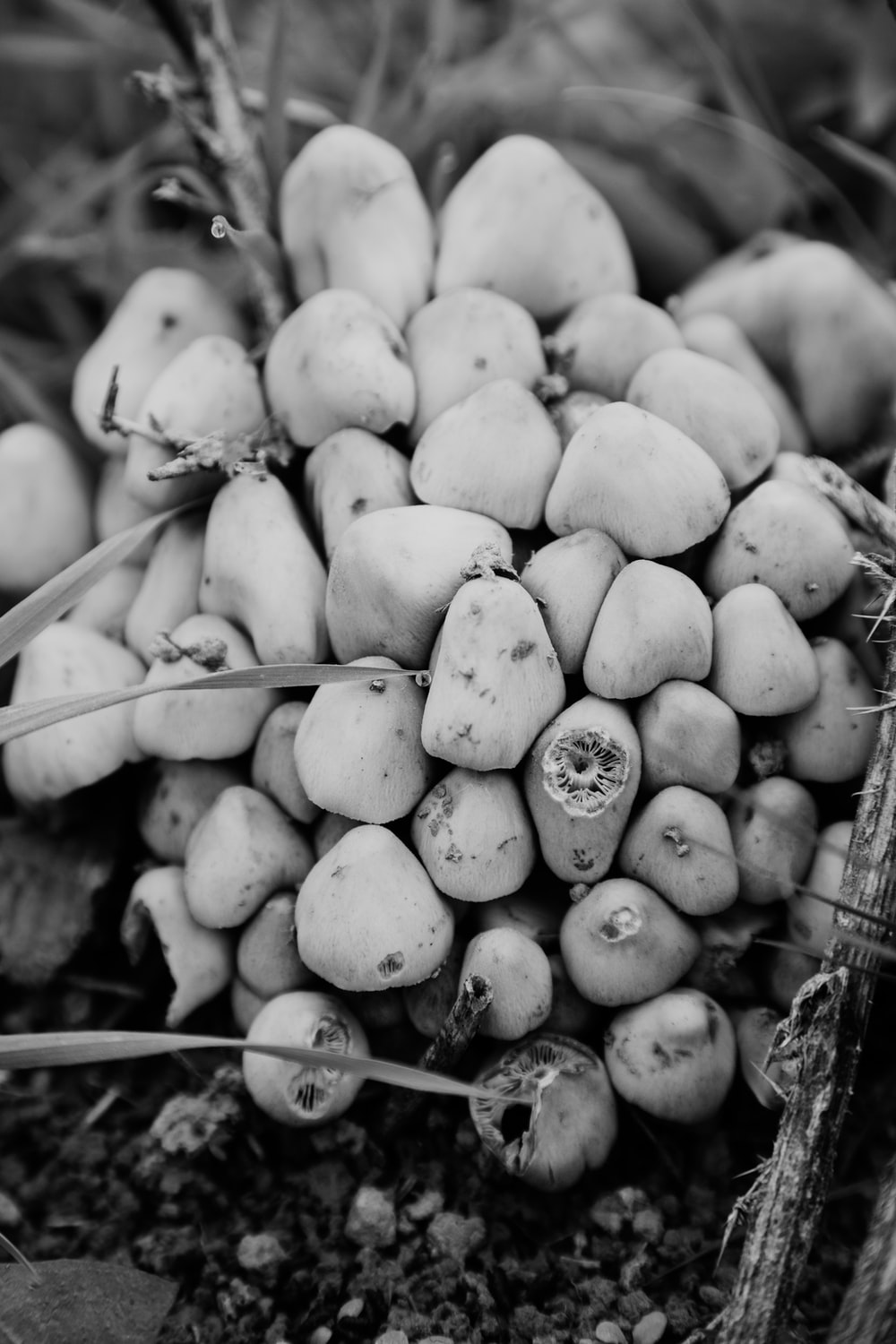 grayscale photo of round fruits