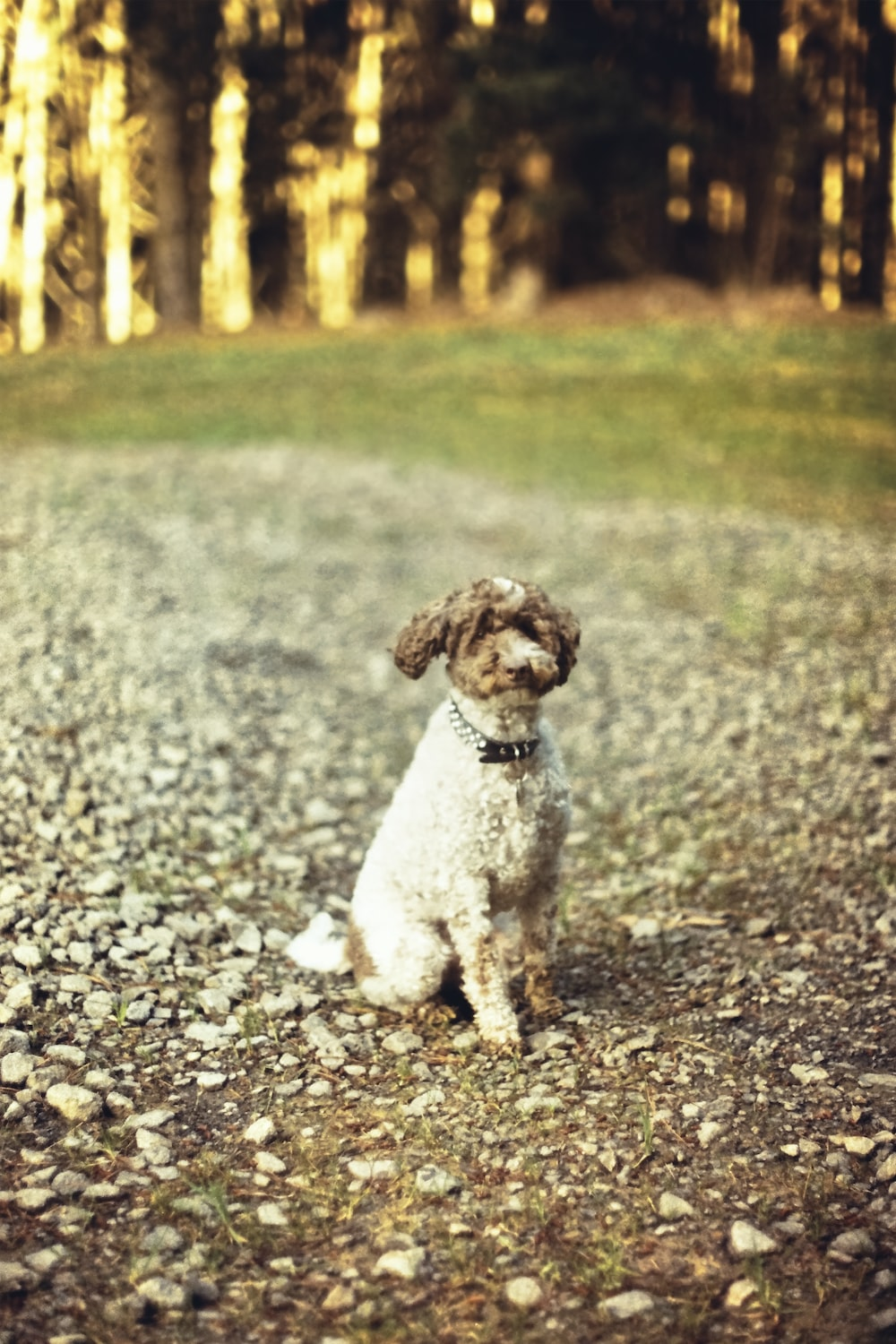 white and brown short coated small dog on gray and white rocky road during daytime