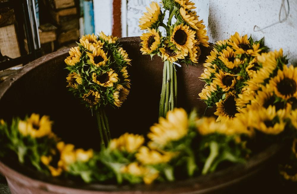 yellow flowers on black pot