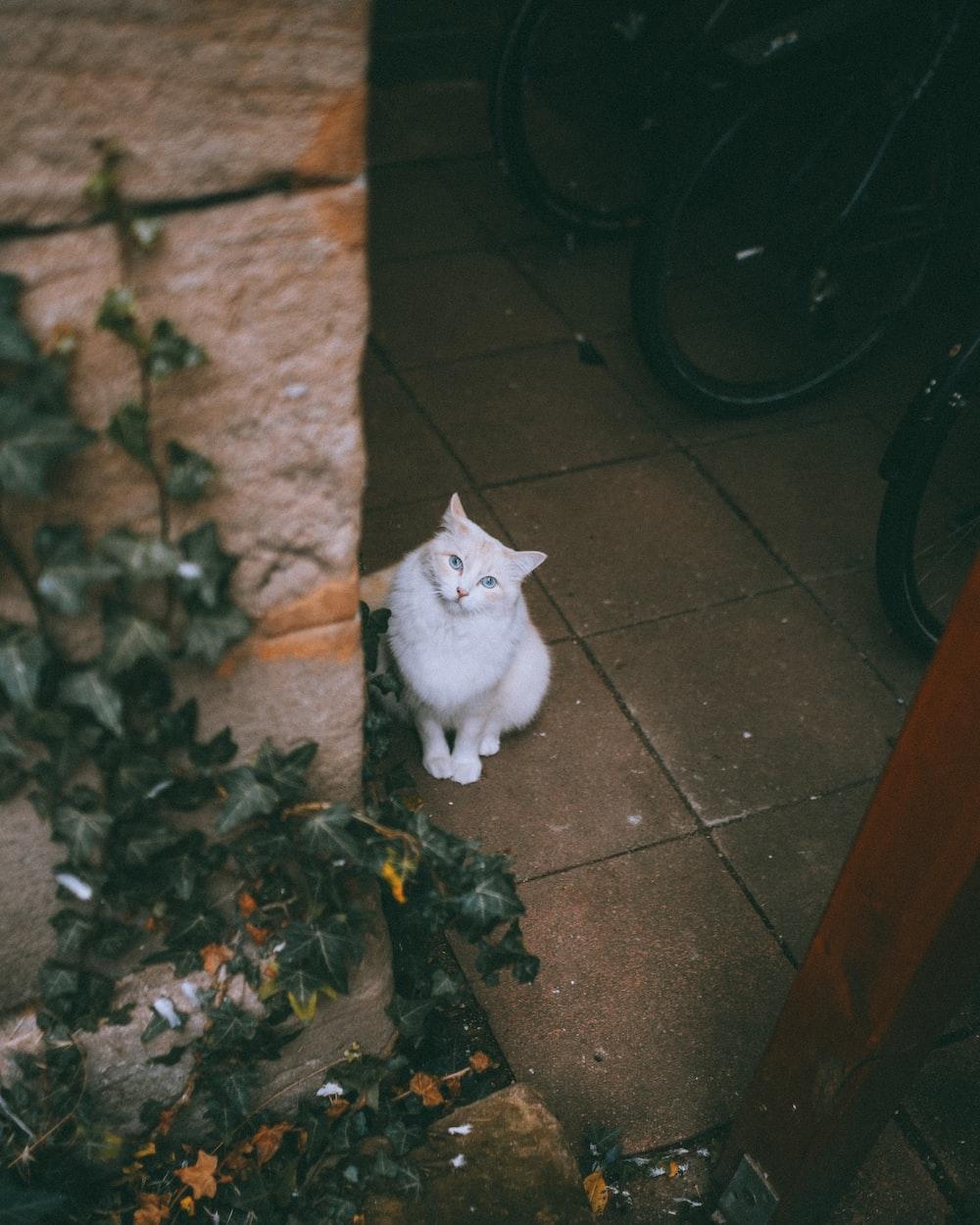 white cat on brown floor tiles