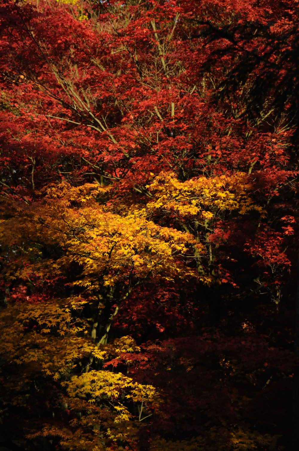 red and yellow leaves on ground