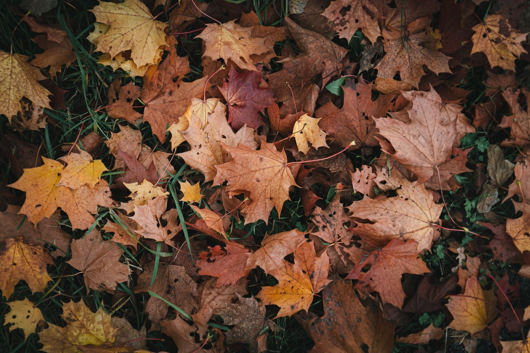 Autumn #02 - unsplash