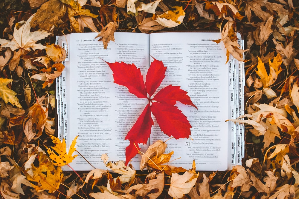 red maple leaf on white book page