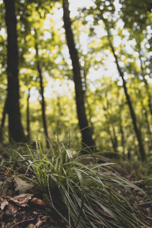 green grass in tilt shift lens