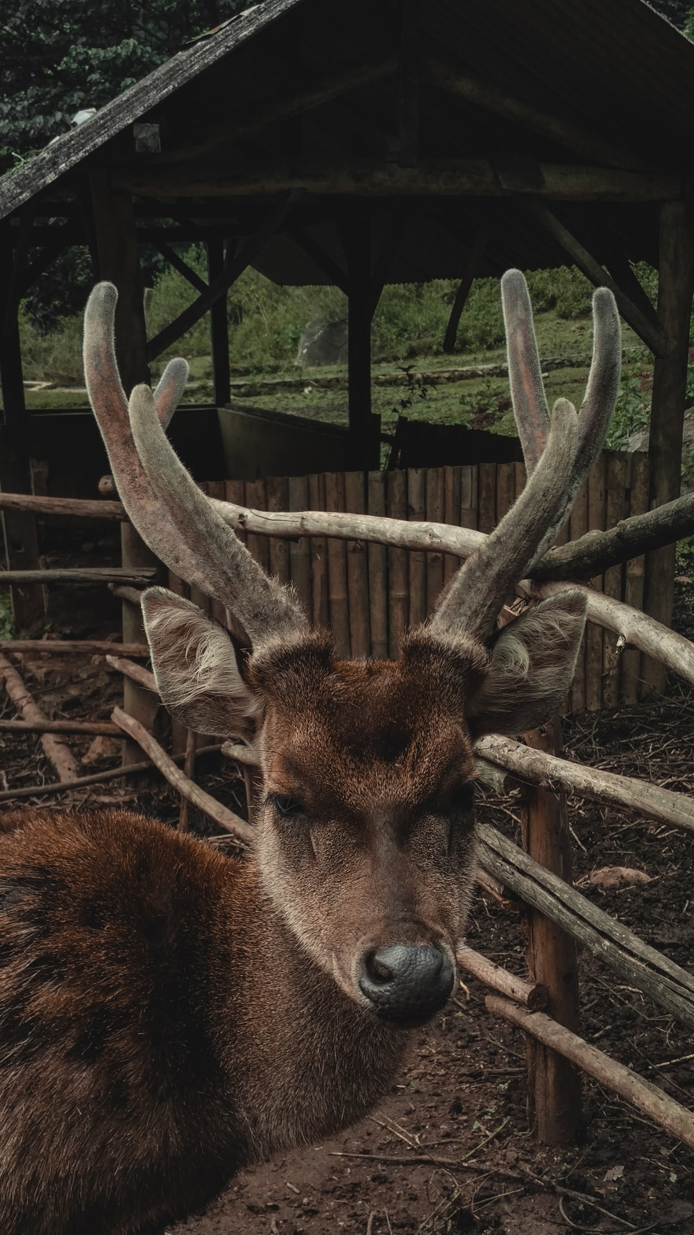 brown deer on brown wooden fence during daytime