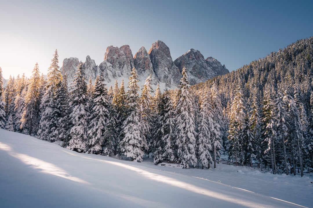 Snow Covered Trees and Mountain During Daytime - unsplash