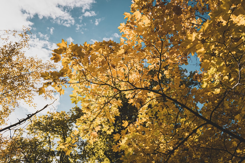 yellow leaves on tree branch under blue sky during daytime
