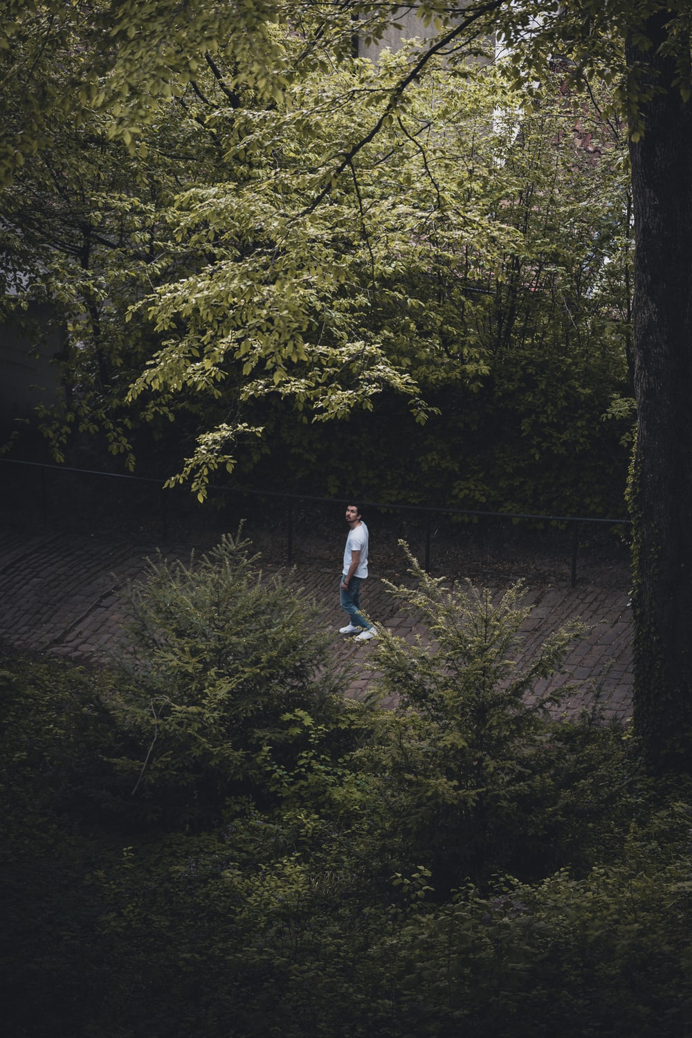 man in white t-shirt and blue denim jeans walking on pathway between green trees during
